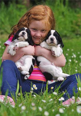 Girl with Spaniel Puppies