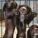 puppies-dog-kennel