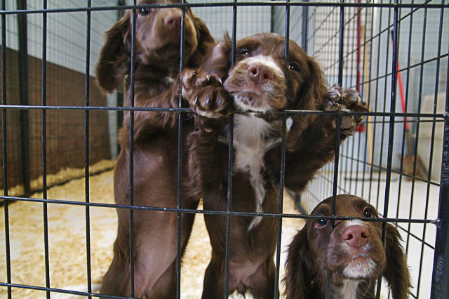 Dog Vaccinations For Kennels
